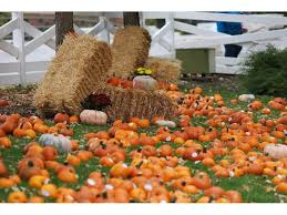 Illinois Pumpkin Patch 2015 by Lincoln Park Zoo U0027s Fall Fest Features Cornucopia Of Family Fun