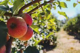 Pumpkin Picking Richmond Hill by Where To Go Apple Picking In Georgia
