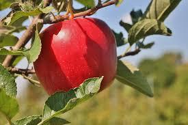 Pumpkin Patch Arthur Il by Apple Varieties Curtis Orchard U0026 Pumpkin Patch Champaign Il