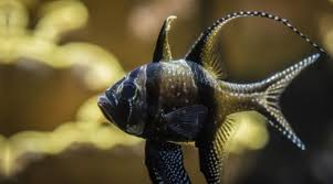 aquarium geant a visiter belgique aquarium la rochelle site officiel