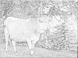 Coloriage Animaux Jungle Agréable 51 Lovely Coloriage Vache