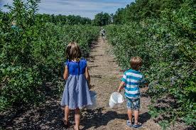 Pumpkin Patch Near Caledonia Mi by Northern Michigan U Picks Best Places For Local Fruit Mynorth Com