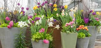 how to plant bulbs in containers dobbies garden centres