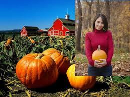Pumpkin Patch Yuma Az Hours by 11 Best Places To Visit Images On Pinterest Autumn Leaves Honda