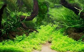 Mini Aquarium Creative Design Wallpaper 5 Wallpapers | Aquarium ... The Green Machine Aquascaping Shop Aquarium Plants Supplies Photo Collection Aquascape 219 Wallpaper F Amp 252r Of The Month October 2009 Little Hill Wallpapers Aquarium Beautify Your Home With Unique Designs Design Layout New Suitable Plants Aquariums Pinterest Pics Truly Inspired Kinds Ornamental Aquascaping Martino Agostini Timelapse Larbre En Mousse Hd Youtube Beauty Of Inside Water Garden Inspirationseekcom Grass Flowers Beautiful Background