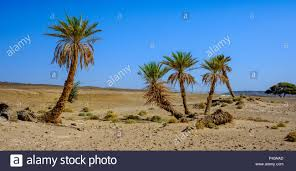 100 L Oasis Oasis Sacre A Small Oasis In The Moroccan Sahara Desert