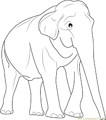 Male Asian Elephants Coloring Page