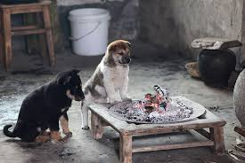 Cute Puppies Barking Cold Stove 3
