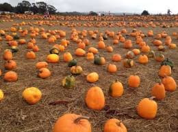 Best Pumpkin Patches Indianapolis by The Best Pumpkin Patches For Picking Your Own Jack O U0027 Lantern