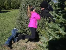 Tannenbaum Christmas Tree Farm Michigan by The Day Christmas Tree Farms Open For Business News From