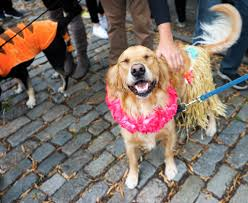 Tompkins Square Park Halloween Dog Parade 2016 by Explore Your City Tompkins Square Halloween Dog Parade