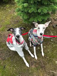 Christmas Tree Baler by The Pups Pick A Christmas Tree U2013 The Pointy Snoot