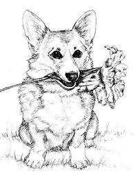 22 best Corgi coloring pages images on Pinterest