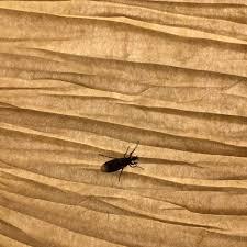 kleine schwarze fliegen wo kommen die zimmer