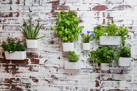 Amazon Vertibloom Living Wall Garden Starter Kit Modular
