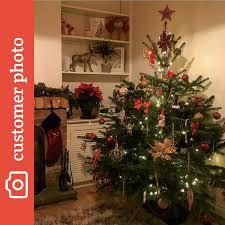 Nordmann Fir Christmas Tree Seedlings by Buy Nordman Fir Christmas Trees Online Send Me A Christmas Tree