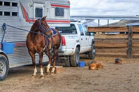 100 Cowboy Truck Free Images Farm Dog Country Truck Vehicle Cowboy Western