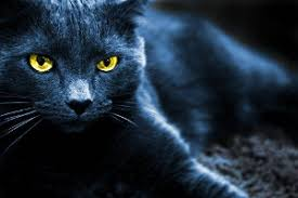 warrior cat which warrior cat are you from the journey