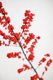 Winterberry Christmas Tree Farm by How To Simplify And Enjoy The Holiday Season Simple Local Life