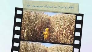 Mccalls Pumpkin Patch Albuquerque Nm by St Bernard Farms In Clovis New Mexico Youtube