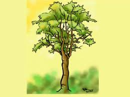 Draw a Detailed Tree Step 7