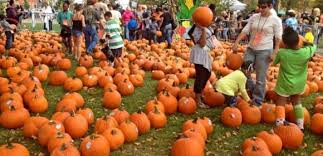 Pittsburgh Area Pumpkin Patches by The Ultimate Fall Pittsburgh Bucket List Pittsburgh Beautiful