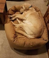Xlarge Dog Beds by Dog Beds Pet Bed Lifetime Guarantee Usa