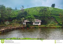 100 River Side House In River Side Stock Photo Image Of Vagamon Most