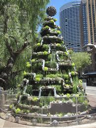 Top Live Christmas Trees by 28 Live Christmas Trees Sydney Christmas Trees Sydney Live Amp