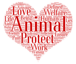 Word Cloud Donation Animal Welfare Help Home