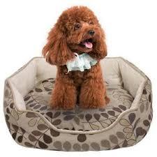 repulsif chien pour canapé canape pour petit chien achat vente pas cher