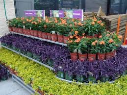 Chagrin Falls Pumpkin Roll by Plant Center Displays For Retail And I Like Their Display