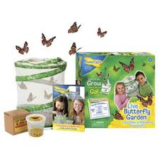 Buy Insect Lore Live Butterfly Garden from our Science & Discovery
