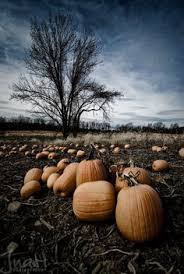 Pumpkin Patch Playground Chattanooga Tn by Pumpkin Patch Playground Signal Mountain Tn Autumn Pinterest