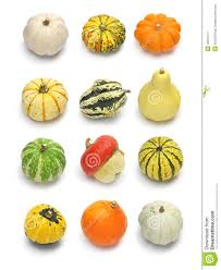 Types Of Pumpkins And Squash by Colorful Pumpkin And Squash Collection Stock Photo Image 45015111