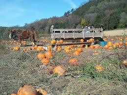 Lodi Pumpkin Patch Wisconsin by Farm Treinen Farm Corn Maze U0026 Pumpkin Patch
