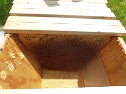 Inside A Top Bar Hive - 1 - Central Indiana Beekeepers Association Midstate Bkeepers Photo Gallery Top Bar Hive Plans Free Ittk A Detailed Look At The Beehive Perfectbee The Great Alaskan My Creations Brisbane Backyard Bees With Entry Feeder In Alaska Youtube Best Wild Bunch Alternative Bkeeping Hives Sustainable For Langpohl Its Bees Knees Peace Bee Farmer Managing 200 Lowcost Way Book Demstration