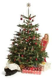 Nordmann Fir Christmas Trees Wholesale by Nordmann Fir Arbodania