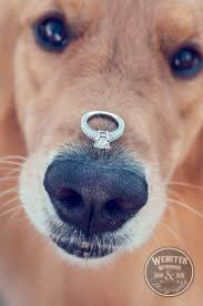 30 Best Engagement Images On Pinterest Engagement by 106 Best Wedding Proposal Ideas Images On Pinterest Wedding
