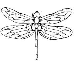 Dragonfly Coloring Sheets Pages Pictures To Color Page Speaks
