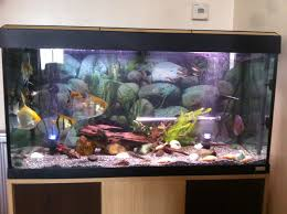 Star Wars Fish Tank Decorations by Cool 20 Tropical Fish Tank Interior Design Ideas Design Ideas Of