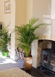 gesundes wohnen die perfekte pflanze für jedes zimmer geo