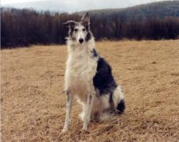 Large Dog Breeds That Dont Shed by The 11 Least Affectionate Dog Breeds Rover Com