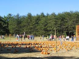 Maize Valley Pumpkin Patch by Pumpkin Carving Tips And Everything Pumpkins