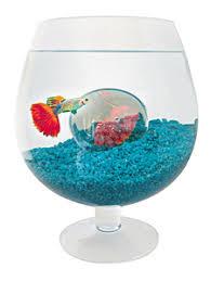 un aquarium en forme de verre à pied aquarium