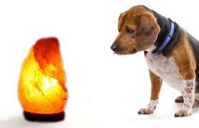 Salt Lamp Warning Hoax by Are Himalayan Salt Lamps Safe For Pets And Babies Himalayan