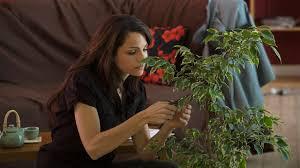 zimmerpflanzen für ein besseres raumklima mdr de