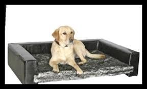 repulsif chien pour canapé repulsif chien canapé 6213 canapé idées