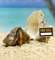 Halloween Hermit Crab by How Long Do Hermit Crabs Stay In One Shell Animals Mom Me