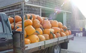 Seattle Pumpkin Patch For Adults by The Best Places To Go Pumpkin Picking In Long Island Travel